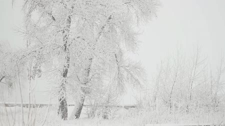 Tree and snowfall in the winter park Stock Footage