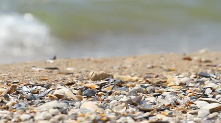 muszla : Sand and shells on the background of the sea