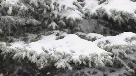 Falling snow on a background of a winter forest