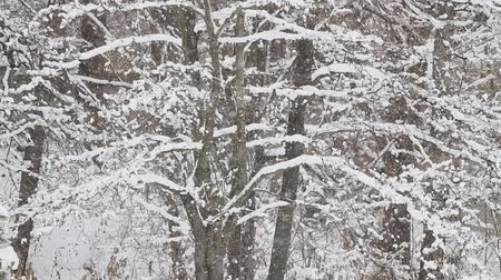 Snow in a winter park on a background of trees Stock Footage