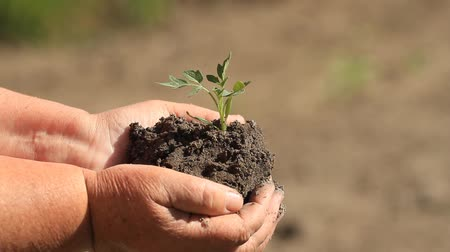 nurture : Woman holding young plant in hands against the soil background