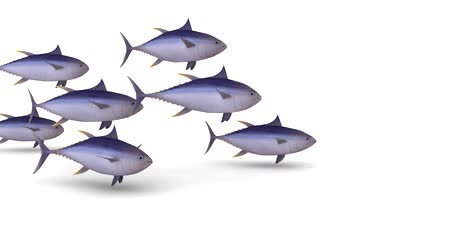 balık : group of yellow tuna fin on white background, 3d animation