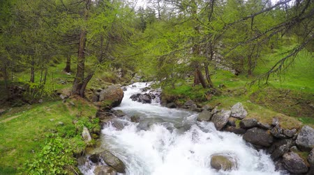 pohoří : Wild stream flowing in idyllic uncontaminated environment and lush green larch woodland on the Italian Alps. Dostupné videozáznamy