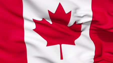 kanada : Realistic 3d seamless looping Canada flag waving in the wind. Stok Video