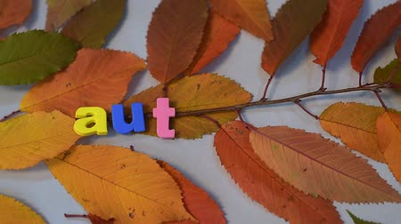 мегафон : Male hand, write word autumn with colorful letters on yellow leaves background.