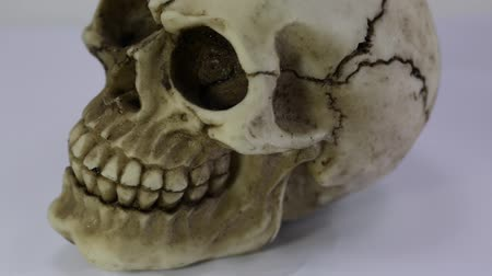 human skull that turns with white background Stok Video