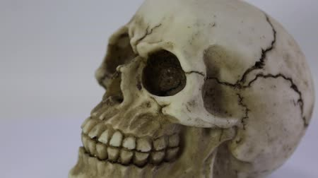 terrifying human skull that turns with white background