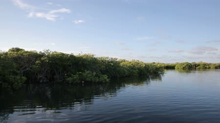 la reina : The boat rushes through the mangroves in the Jardinas de la Reina