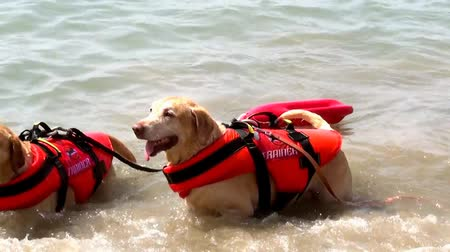 rescue dog : Water dogs