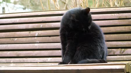 enjoyable : Black cat sitting on a bench Stock Footage