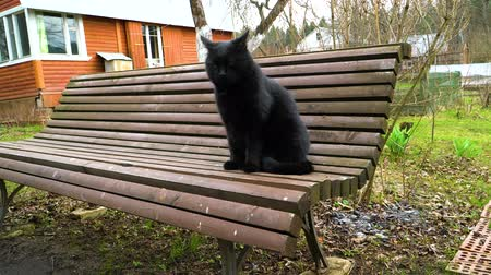 collier : Chat noir assis sur un banc