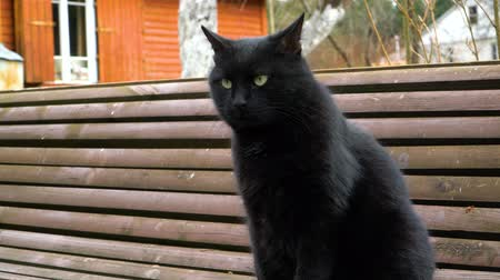 Black cat sits on the bench