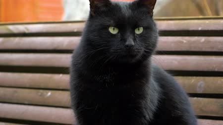 A sleeoy black cat sits on the bench