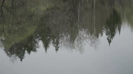 Reflection of trees in the rippling water of the lake