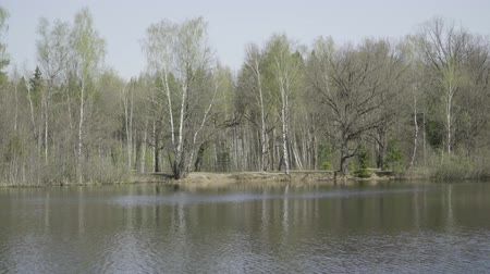 vystavený : The Bank of the autumn river with growing birches Dostupné videozáznamy