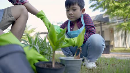 pikk : hand planting a new plant on pot. gardening activity