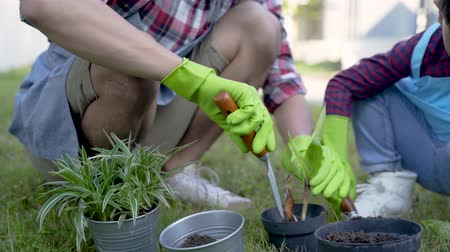 hand planting a new plant on pot. gardening activity