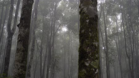 pastoral : forest in the morning with full of haze Stok Video