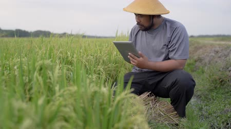 tab : farmer using smart technology gadget for agriculture Stock Footage