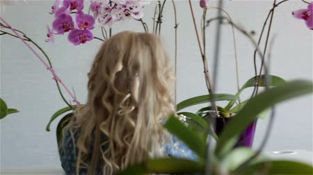 cabelos grisalhos : Little girl with white curly hair is taking care for the flowers at home. Vídeos