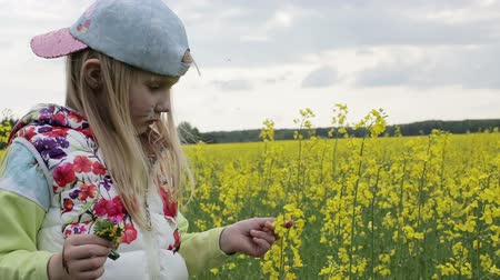 plucks : Little beautiful girl plucks flowers of rape.