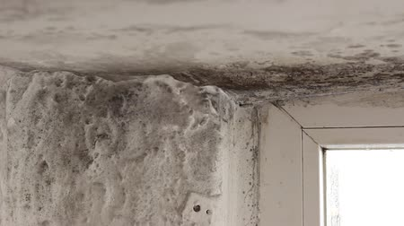 wetness : Mold growing in basement. Mold colonies growing above ceilings