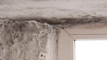 wetness : Mold in house on walls, ceiling, windows. Mold in the basement. Condensation causes mold