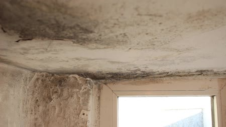 влажность : Mold growing in basement. Mold colonies growing above ceilings