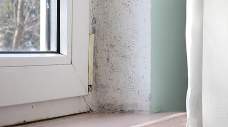housing problems : Damp and mold growth problem. Condensate dampness black mold on window, walls and curtains