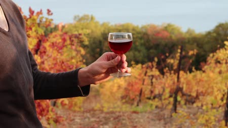 vinná réva : Vintner with a glass of wine. Autumn in the Vineyards. Wine tasting