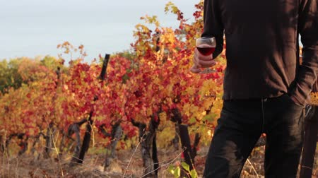 viticultura : A man with a glass of wine on a vineyard in autumn. Autumn wine tasting