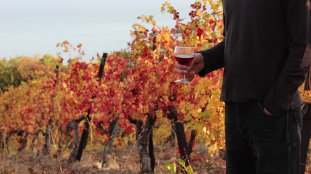 winemaking : A man with a glass of wine on a vineyard in autumn. Autumn wine tasting
