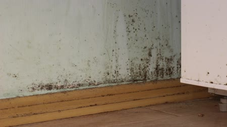 влажность : Mold in house Стоковые видеозаписи