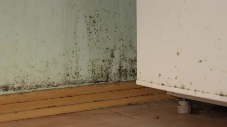 wetness : Black mold on walls. Mold in house