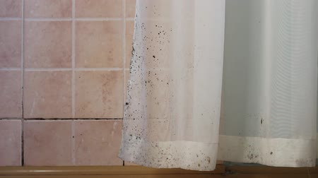 wetness : Toxic black mold in the kitchen. Mold in house: on walls, curtains, tile, ceiling, windows, furniture