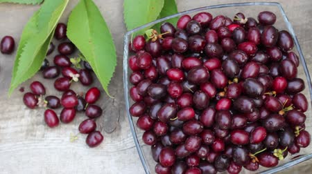 brusinka : Cornelian cherry fruits. Cornus mas, European cornel or Cornelian cherry dogwood. Ripe fruit is dark ruby ??red
