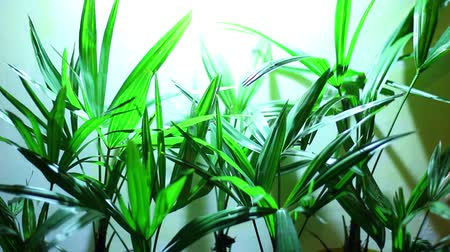 sazenice : A plant light is an artificial light source, generally an electric light, designed to stimulate plant growth