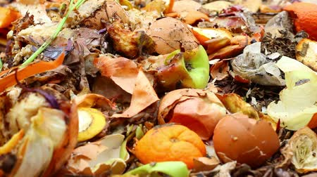muck : Food wastes and Red Worms  Redworms (also known as red wiggler, brandling or manure worms) are the best suited to worm composting because they thrive on organic material, such as food waste Stock Footage