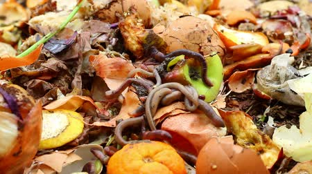decomposition : Vermicomposting. Worm composting is an easy, efficient way to recycle food wastes into a fine, high-quality compost (worm castings) for your houseplants or garden