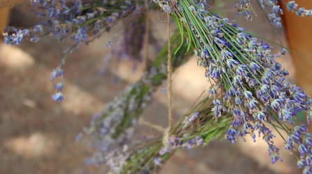 herbalist : Aromatherapy with lavender. Springs of fragrant dried flowers. Medicinal uses for dried lavender herb. Sprigs of short stem lavender tied with twine