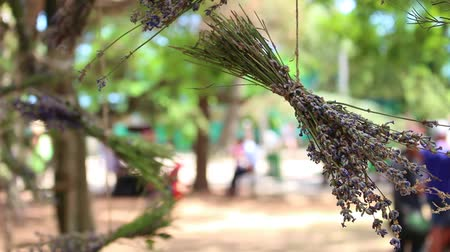 herbalist : Bunches Of Medical Herbs On A String Outside. The Ayurveda medicinal system is based on herbs. The beautifully prepared lavender bouquets and lavender buds
