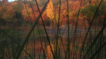 ações : Reflection of the mountain in the national park. Autumn colors
