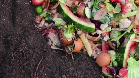 leftover : Recycle kitchen waste with the help of earthworms. Using Worms to Compost Garden Leaves, Food Waste
