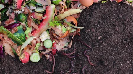 grãos de café : Recycle kitchen waste with the help of earthworms. Using Worms to Compost Garden Leaves, Food Waste
