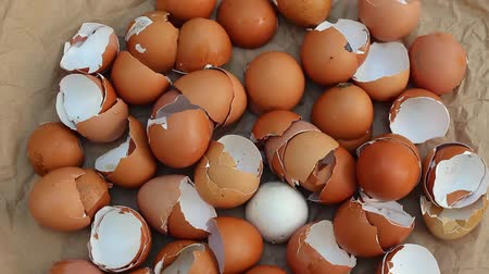 humanóide : Egg shells be a benefit to the garden soil. Eggshells for compost