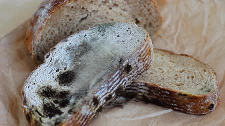 rothadó : Moldy food. Black mold growing on rye