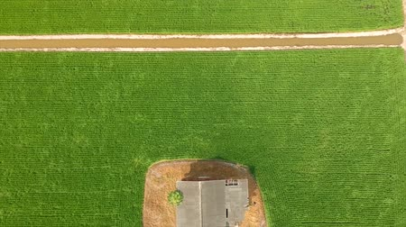 agricultural lands : Aerial view of the beautiful green paddy field during the growing season of rice started in Tanjung Karang, Selangor, Malaysia