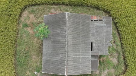 feiúra : Footage of Aerial view of abandoned old wooden house in the middle of paddy field.