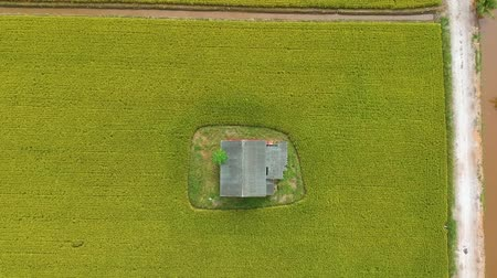 csúnyaság : Footage of Aerial view of abandoned old wooden house in the middle of paddy field.