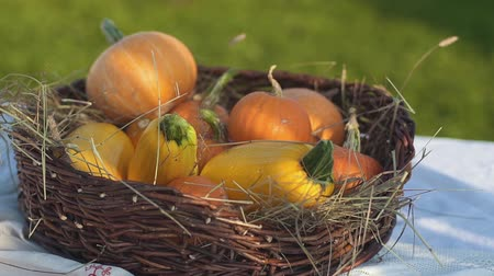 abobrinha : Pumpkin and zucchini in a wicker basket with hay